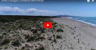 Pineta e spiaggia a Castiglione della Pescaia