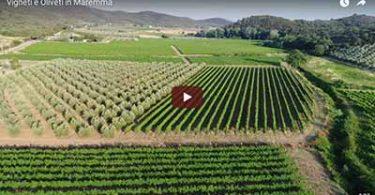 Riprese video di vigneti ed oliveti della Maremma Toscana
